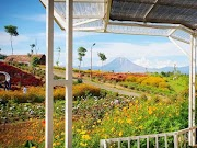 Ada Wisata Madu Efi di Kabupaten Karo, Cocok untuk Edukasi dan Camping