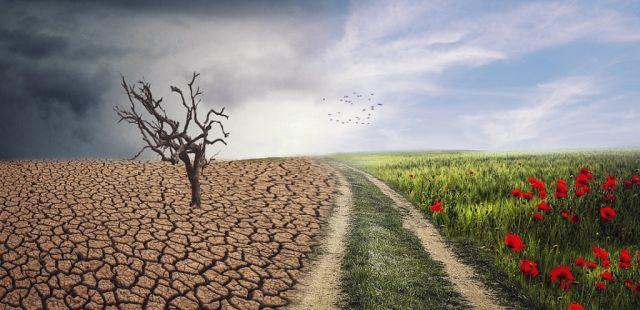 Invitan a plantar 100 millones de árboles en 5 años