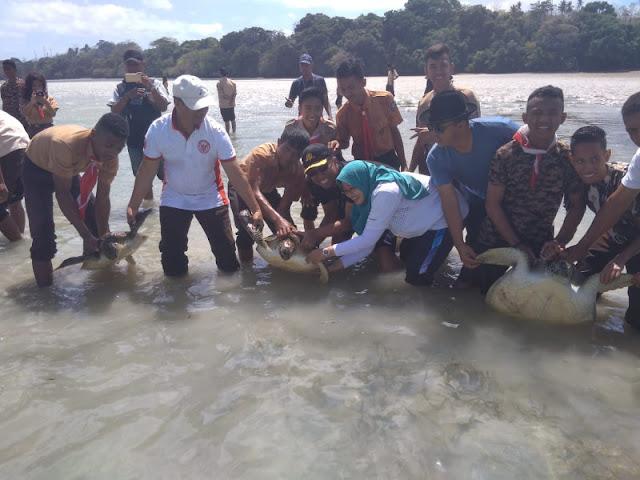 Hartanto Lepas 3 Ekor Penyu di Pantai Lanal Saumlaki