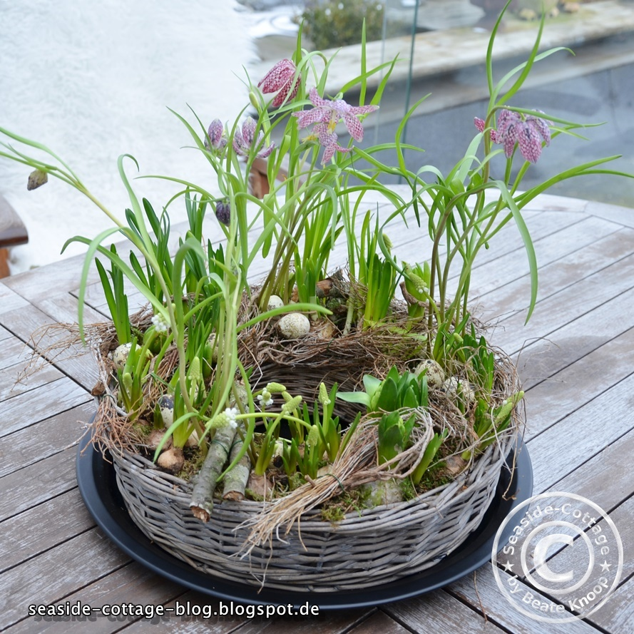 seaside cottage flower friday tischdeko f r den fr hling pflanzring in zwei entwicklungsstadien. Black Bedroom Furniture Sets. Home Design Ideas