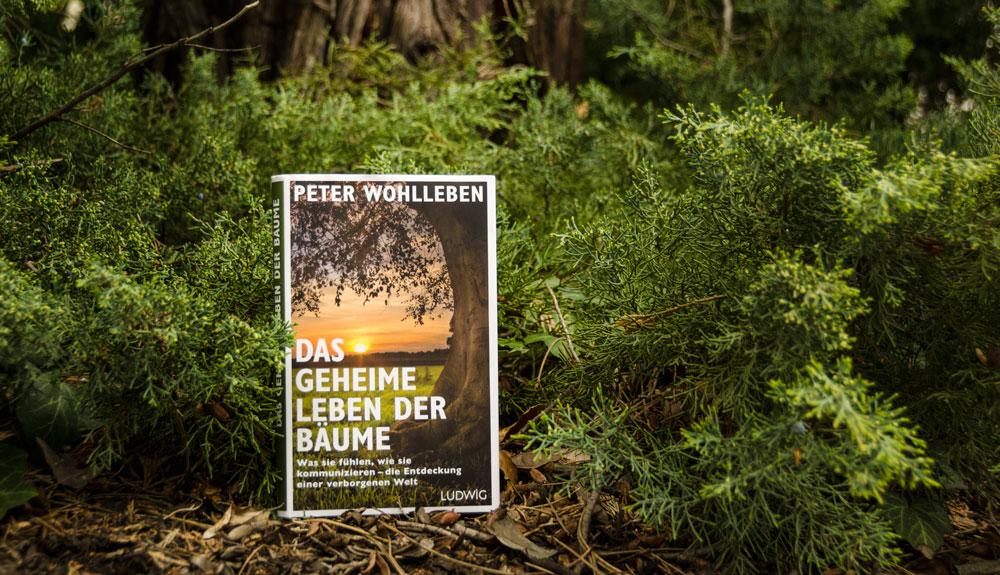 Buch im Wald