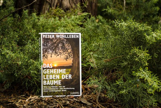 Für Sie entdeckt: Das geheime Leben der Bäume