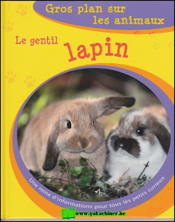 Lapin, Koala, Hamster, poule
