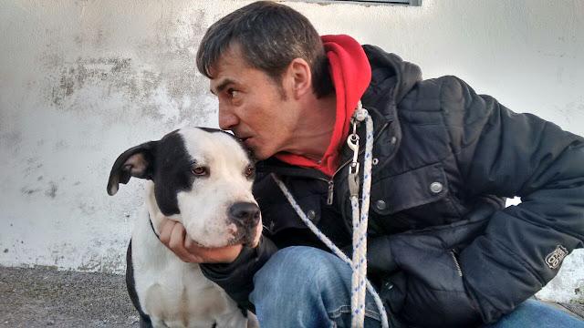 mas que guau en asturias oh fancy dog agresividad canina