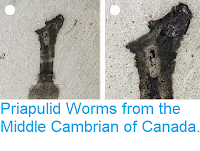 https://sciencythoughts.blogspot.com/2015/05/priapulid-worms-from-middle-cambrian-of.html
