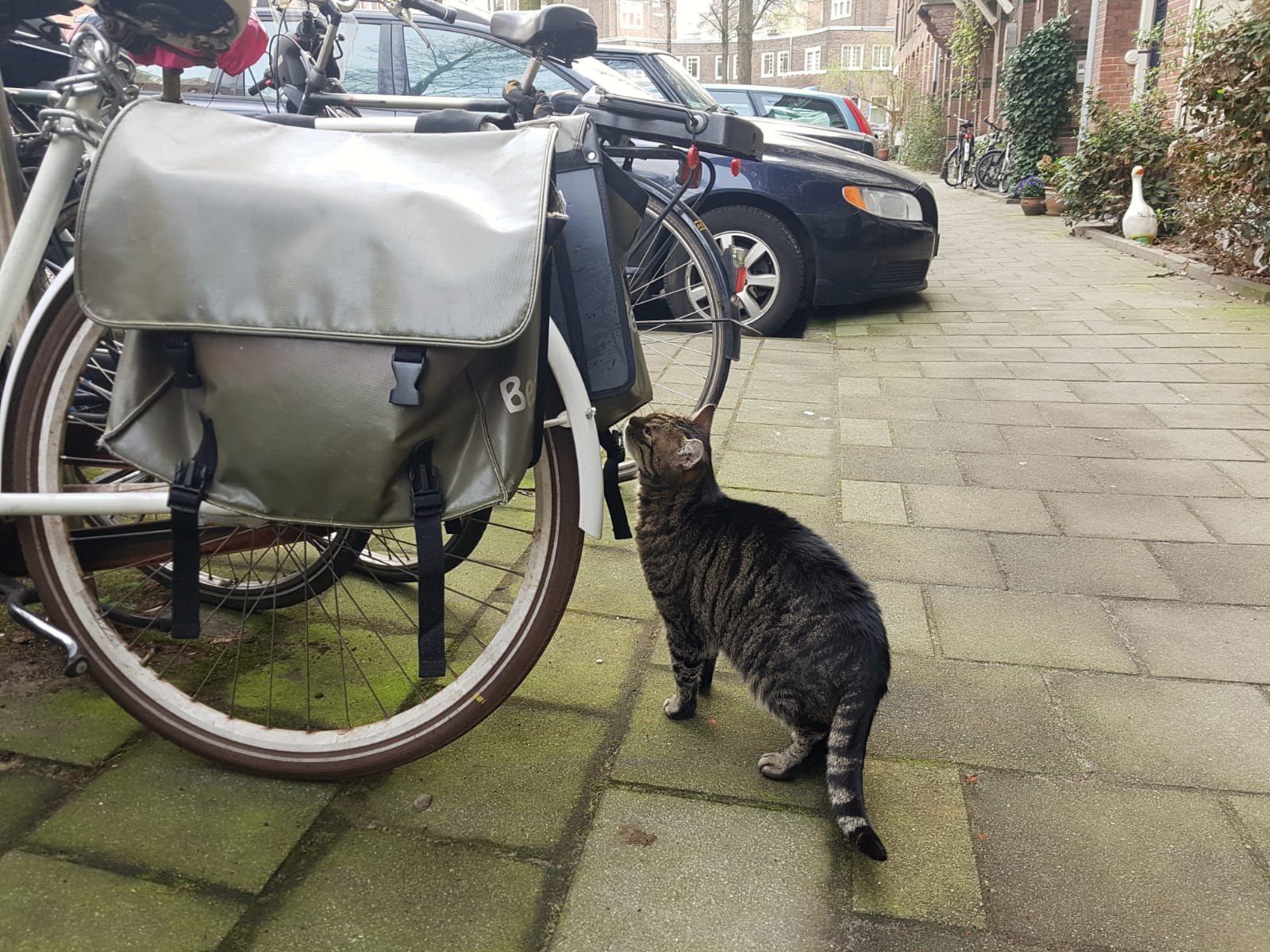 Cats and bicycles in Amsterdam