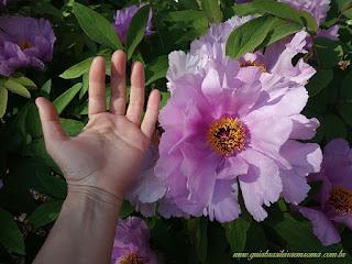 verao em roma jardim botanicp brasileira roma - Sobreviver em Roma no verão - dicas de ouro!