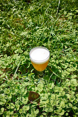 The finished gruit-gose with ground ivy!