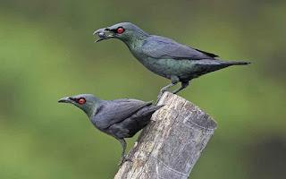 jumlah burung di indonesia