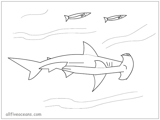 All Five Oceans Hammerhead Shark Coloring Page