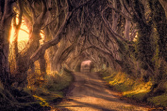 The Dark Hedges, Bregagh Road, County Antrim, Northern Ireland