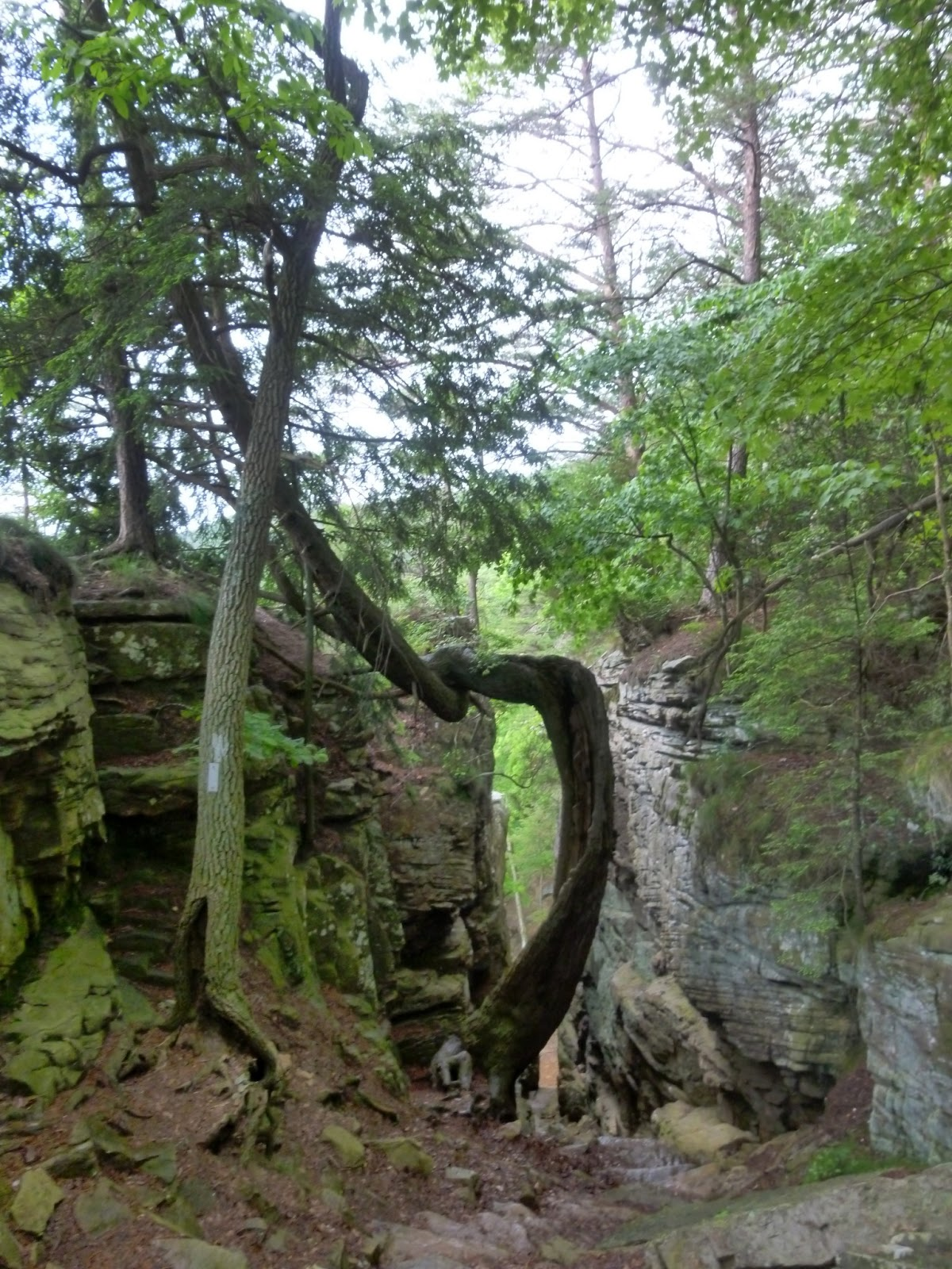 A twisted tree grows out of the Great Stone Door & American Travel Journal: Laurel Falls and Great Stone Door - Savage ...