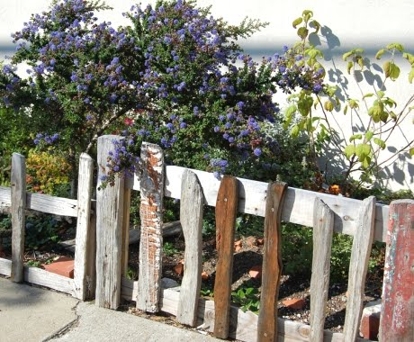 driftwood garden