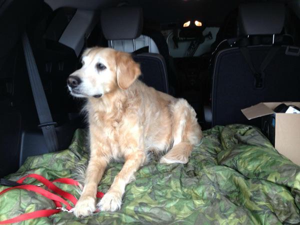 Chủ nhân ghi lại những hình ảnh về thời khắc cuối cùng của cún cưng