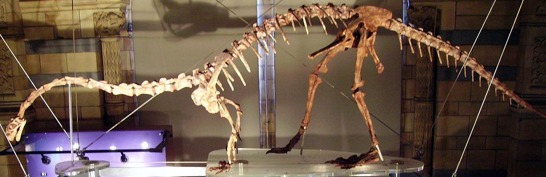 """Képtalálat a következőre: """"Sauropodomorpha"""""""