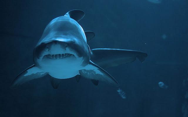 Bureaublad achtergrond met een gevaarlijke haai