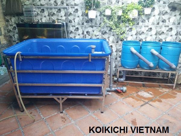 Quarantine tank dưỡng cá koi