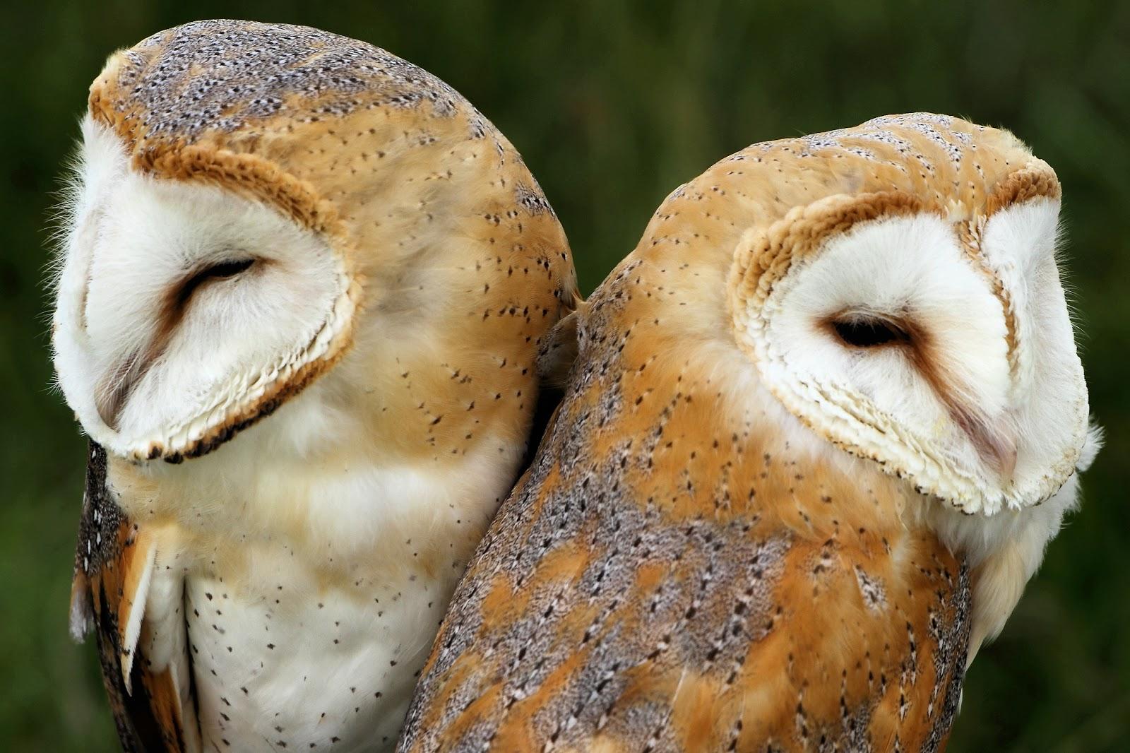 Animales que solo tienen una pareja