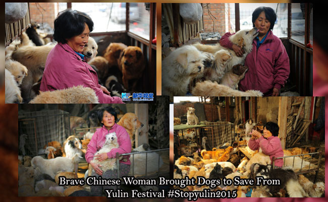 Brave Chinese Woman Brought Dogs to Save From Yulin Festival #Stopyulin2015