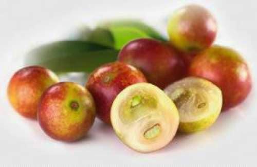 Camu camu: la superfruta más poderosa del Amazonas