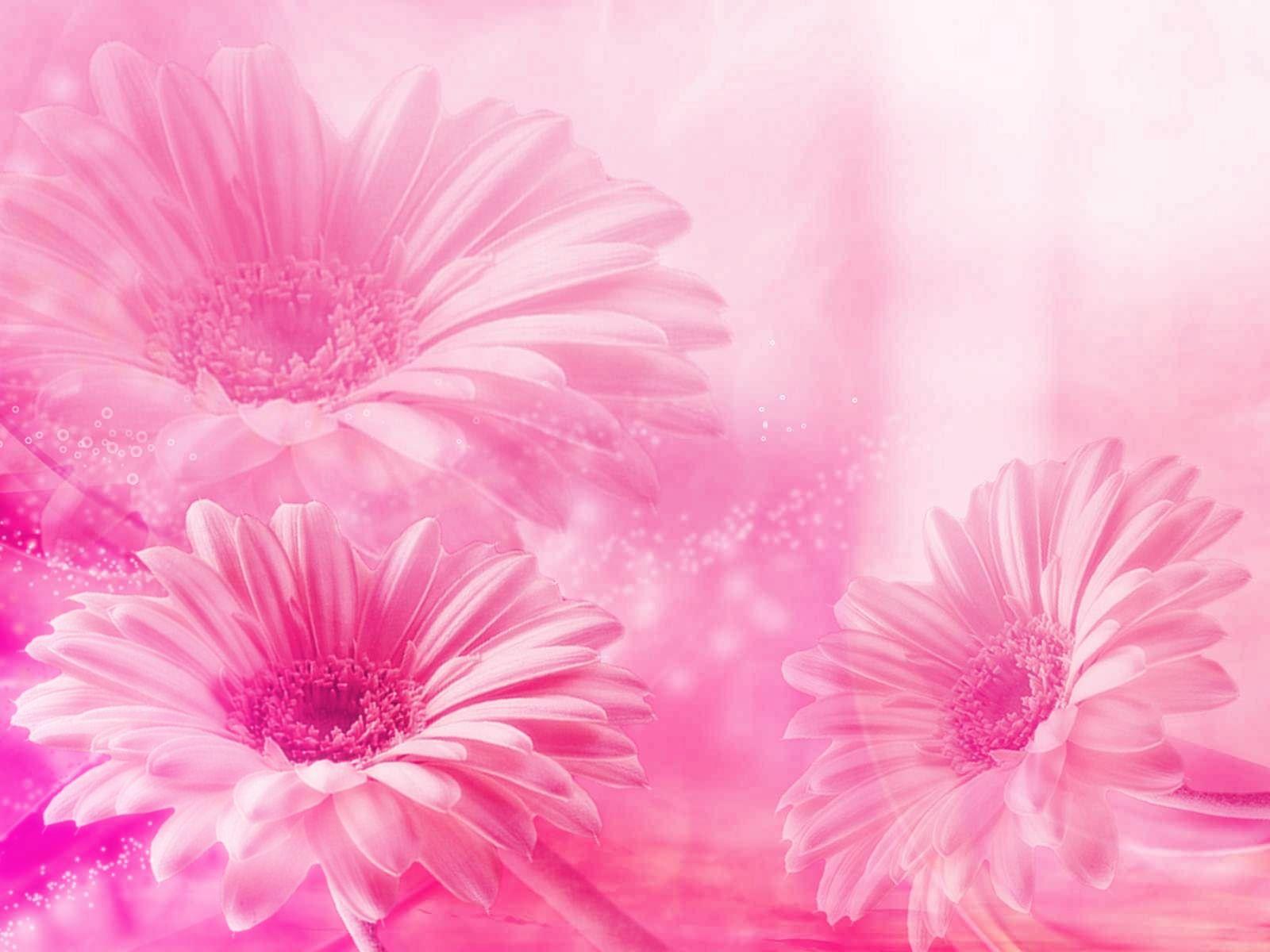 Fondos De Flores Pastel