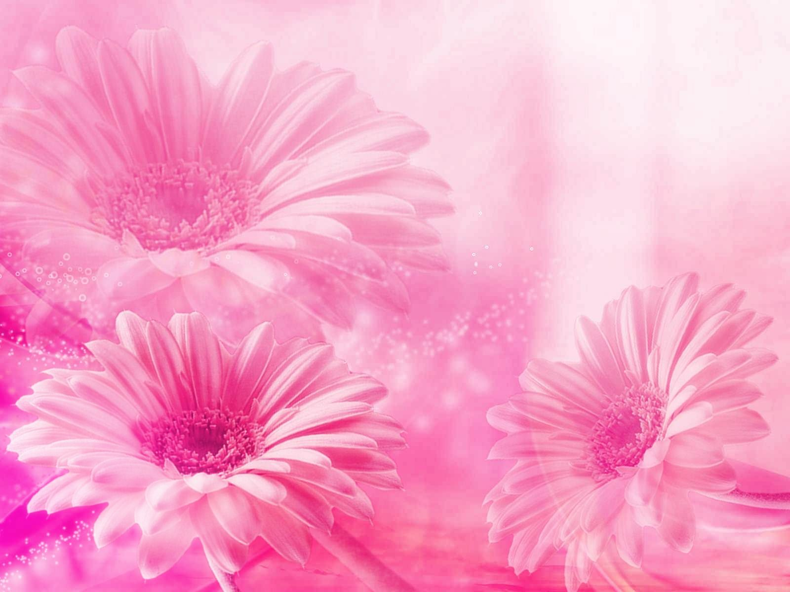 Fondo De Flores De Color Rosa Pastel: Wallpapers Flowers,fondos Flores Colores Pasteles