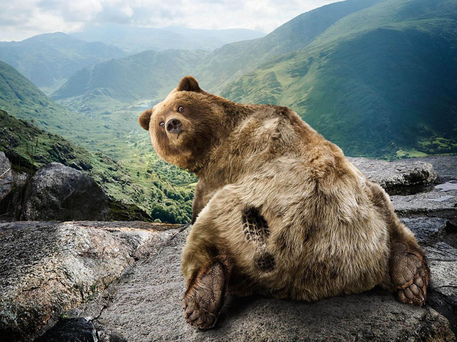 Funny Bear Wallpaper