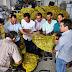 VÁRZEA DA ROÇA / Pequenos produtores rurais de Várzea da Roça recebem 150 mil raquetes de palmas para ser plantadas e servir de alimentação animal no futuro