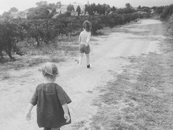 Sortie en famille - La cueillette des figues