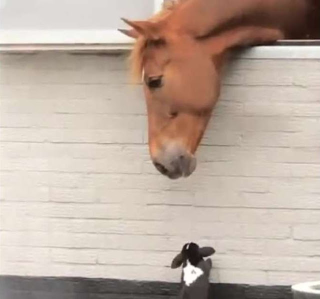 Horse Befriends Rabbits In Incredible Footage