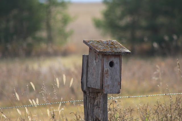 Birdhouse on a fence post in a field