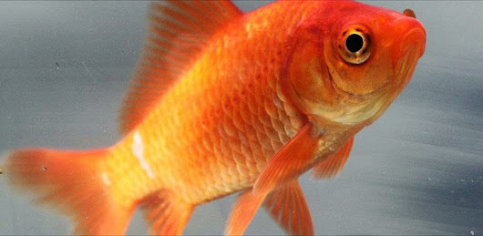 The Daily B: a few thoughts on burying your goldfish