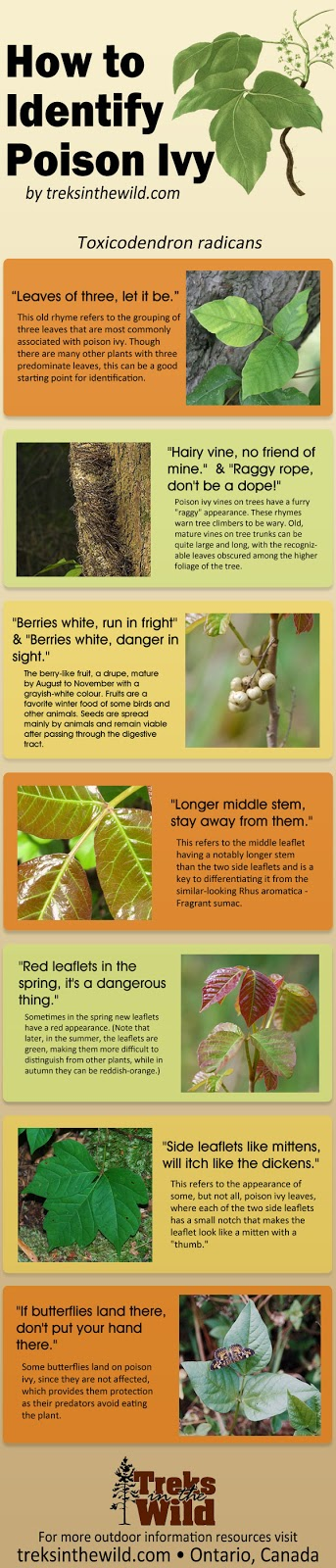 Infographic On How To Identify Poison Ivy