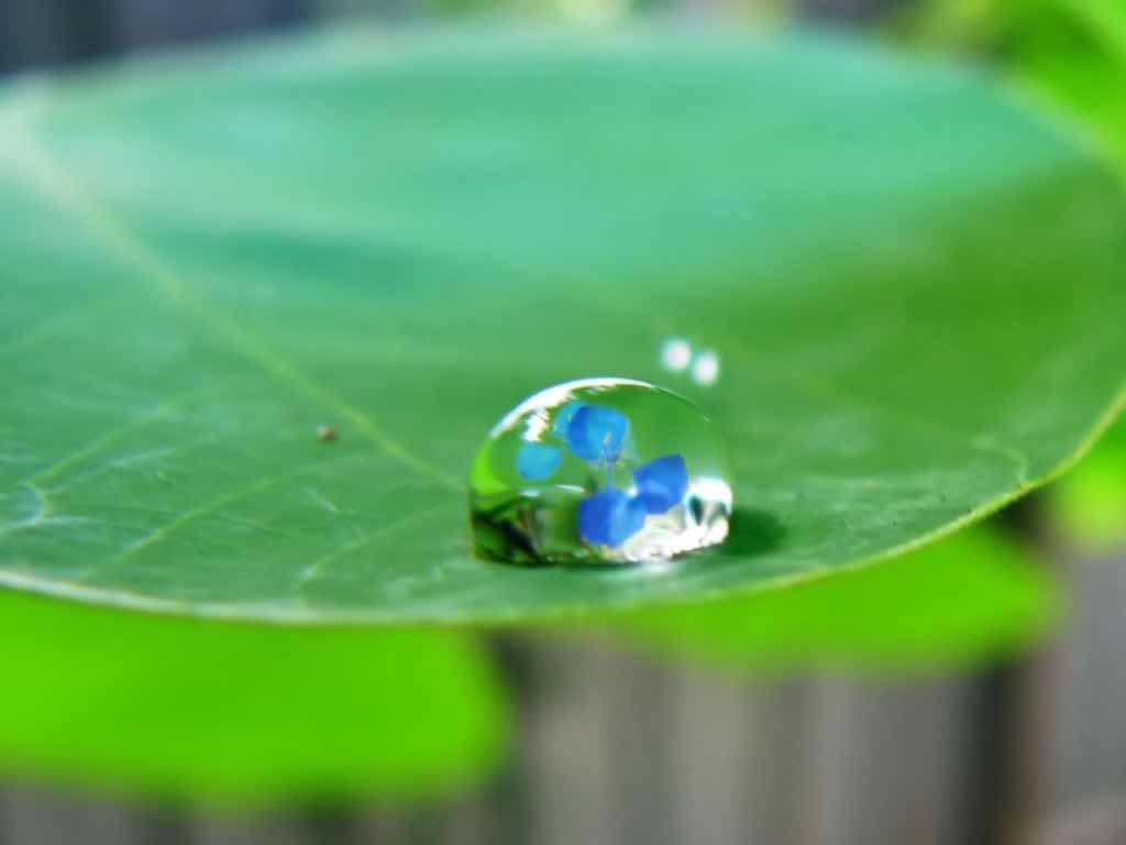 Collection of Wallpapers Water Drops Room Wallpapers