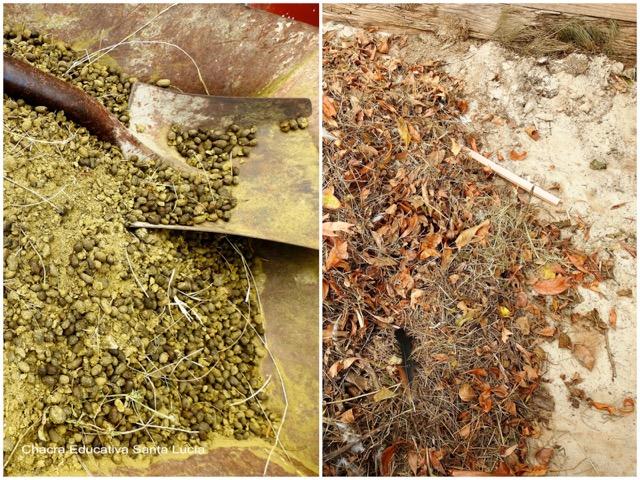 Residuos orgánicos para la pila de compost - Chacra Educativa Santa Lucía