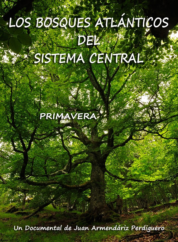 DOCUMENTAL. LOS BOSQUES ATLÁNTICOS DEL SISTEMA CENTRAL. PRIMAVERA. VIMEO.