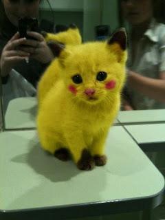 3 Jenis Hewan Yang Cocok Dengan Pikachu