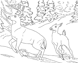 Adorable Deer Coloring Pages For Kids Free