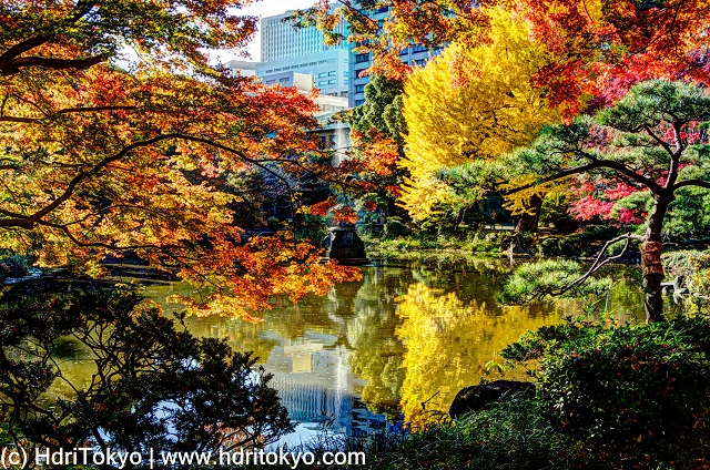 red leaves of Japanese maple and yellow leaves of ginkgo by a pond. tall buildings in back ground.
