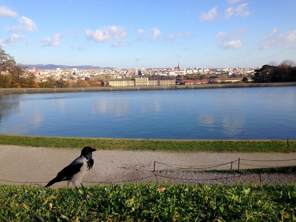 Widok z Glorietty, punkt widokowy Wiednia