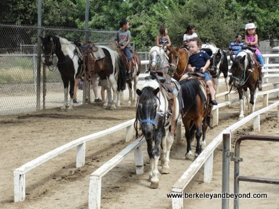 pony rides at Griffith Park in Los Angeles, California