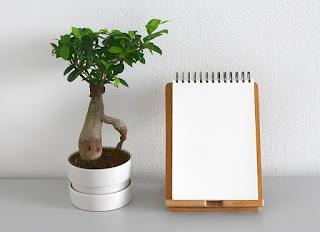 bonsai, hoja blanca