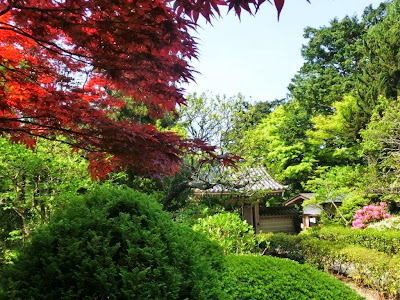 浄妙寺の新緑