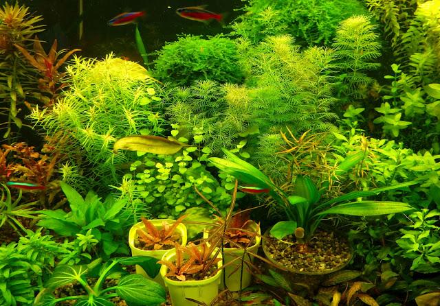пример с живыми растениями в аквариуме