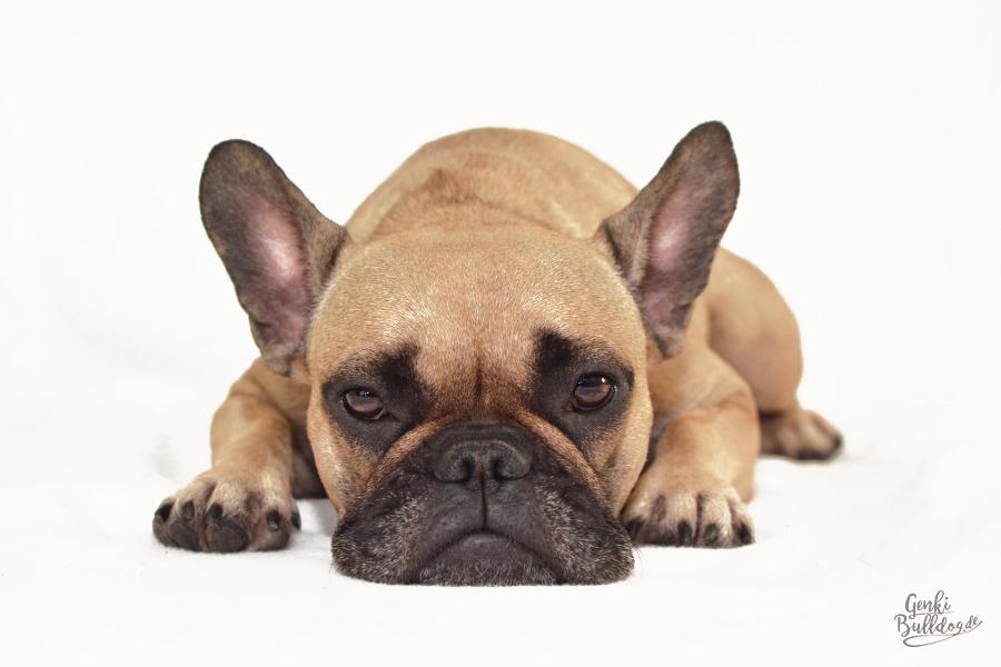 Blog Hund Französische Bulldogge Gesundheit Allergie Juckreiz Hyposensibilisierung Hautprobleme