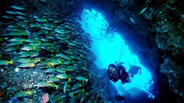ท่องเที่ยว, แนวหินปะการัง, มัลดีฟส์, สถานที่ดำน้ำ, สถานดำน้ำทั่วโลก, อันดับสถานที่ดำน้ำ, พันทา กอร์ดา คอสตาริกา (Punta Gorda, Costa Rica)