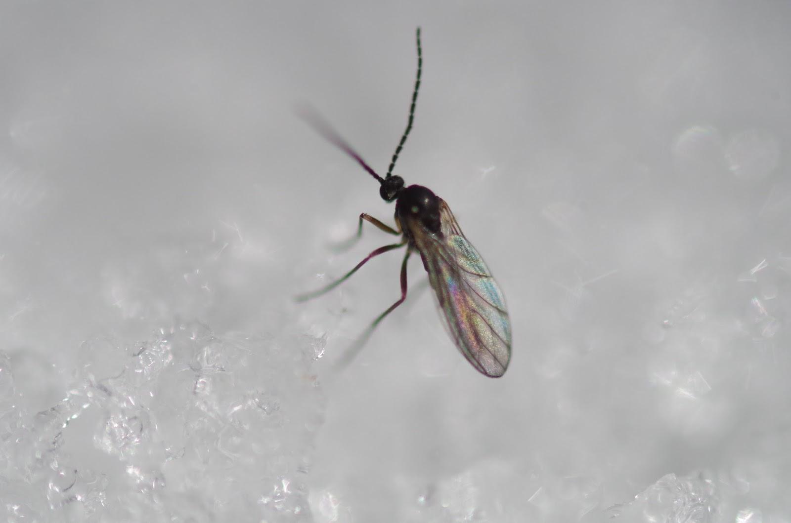 lots of gnats in backyard 28 images 7 week broilers w lots of