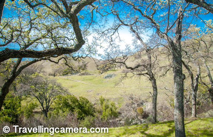 Sunol Regional Wilderness Park has different kinds of Oak trees, Mexican Elderberry, Pacific Madrone & Gray pines etc. It seems, one can see plenty of wild flowers during springs in Sunol Regional Wilderness Park.
