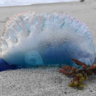 Hundreds of Stinging Jellyfish, Trash, Dead Fish Wash Up On Cocoa Beach