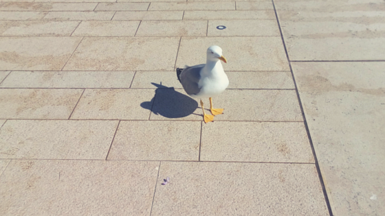 This fabulous seagull just stood there and let people take pictures of him. Let's Talk Happy by Martina